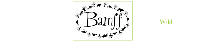 Perthshire Estate | Self Catering & Glamping | Bamff Estate