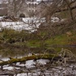 Eurasian beaver (Castor fiber) pond with felled trees in the grounds of Bamff estate with Bamff house in the background, Alyth, Perthshire, Scotland, UK, April.